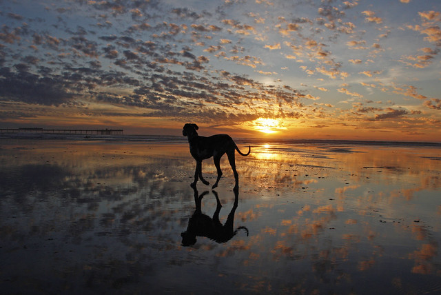 2 52 Sunset At Dog Beach In Ocean Beach A Photo On