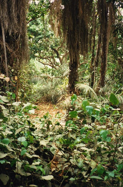 Header of Abuko Nature Reserve