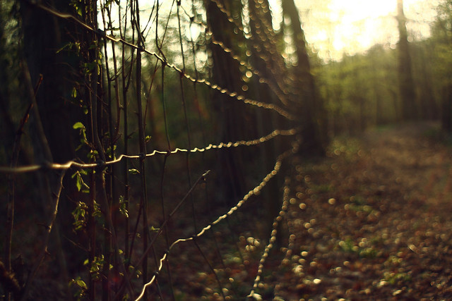 Just a fence in the woods