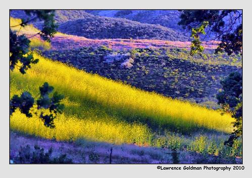 light yellow landscape meadow southerncalifornia agourahills 100comments nikond90 nikonflickraward nikonflickrawardgold santamonicamountainsnra nikonflickrawardplatinum lawrencegoldman lhg11