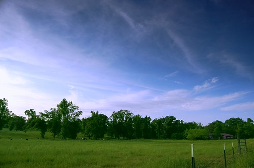 sky field clouds fence mississippi cows pasture hattiesburg