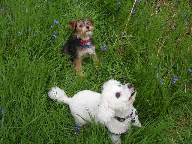 billy and daisy
