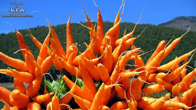Beautiful Carrots in Nice background