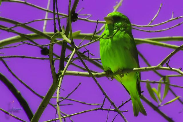verde&morado