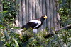 Steller's Sea-Eagle - Photo (c) Edhral, some rights reserved (CC BY-SA)