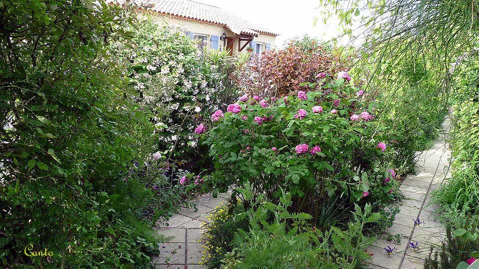 Mon Jardin Printemps 2010 - Massif Rosier Ancien \'Yolande … | Flickr