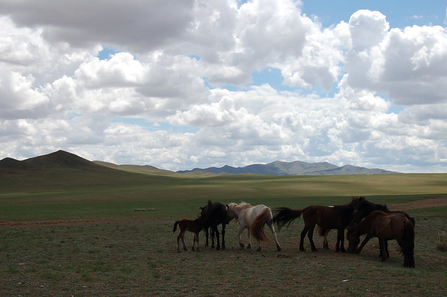 Last view of Mongolia by CC user 21763895@N05 on Flickr
