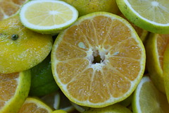 citrus, orange, lemon, key lime, meyer lemon, persian lime, fruit, food, tangelo, sweet lemon, bitter orange, citron, lime,