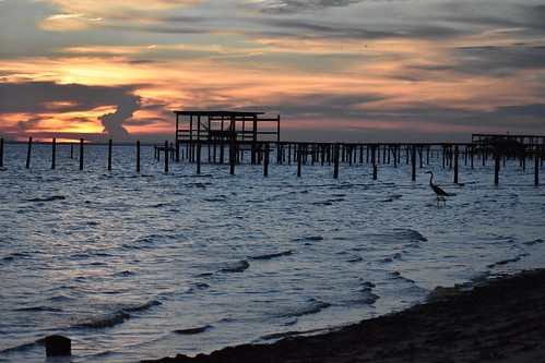 mobile bay montrose blue heron oaks oak trees wharf dock pier sunset alabama water waves tide coast