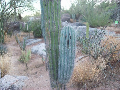 Funny cactus