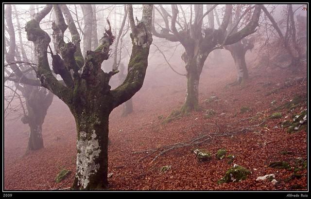 Penitentes en la niebla