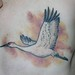 Crane Over Mastectomy Scar Affirming Recovery & Survival