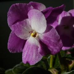 Flowers 2010