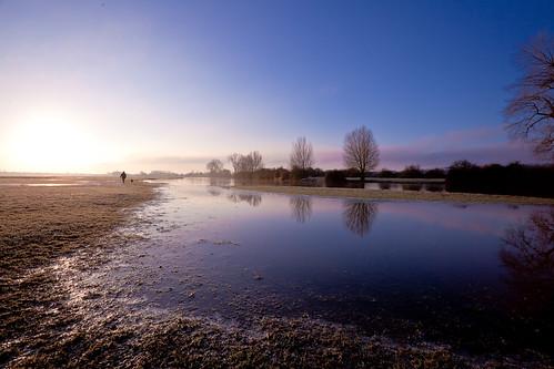 morning winter light dog reflection tree weather sunrise reflections early walk oxford oxfordshire portmeadow
