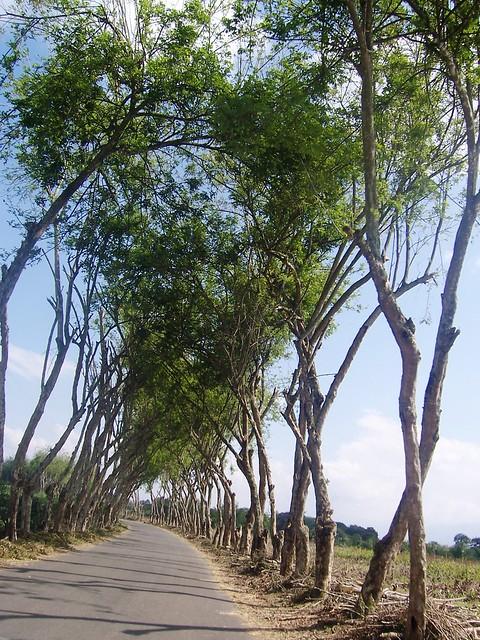 Imagen de un Camino veredal en la Tebaida, Quindio