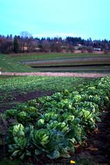 luscher farm at dusk    MG 4215