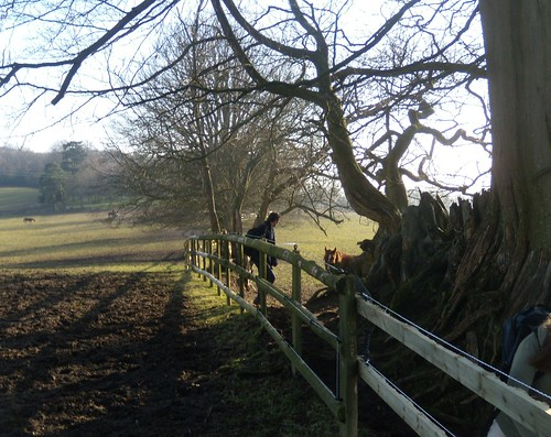 The horse paddock