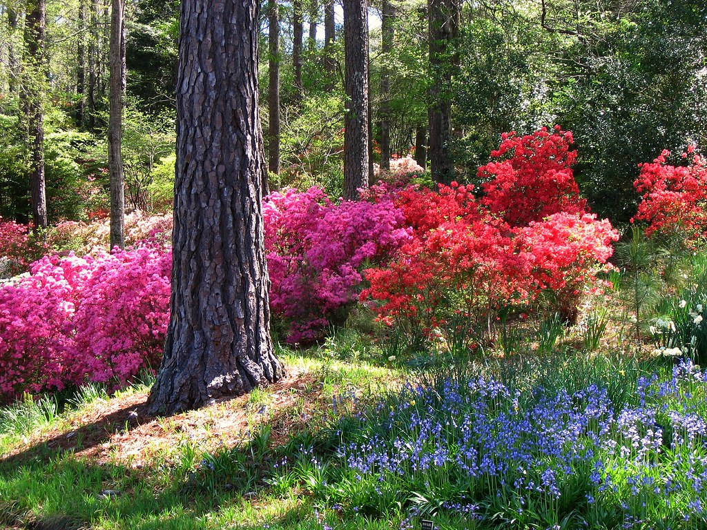 Early April At Georgia 39 S Callaway Gardens A Photo On