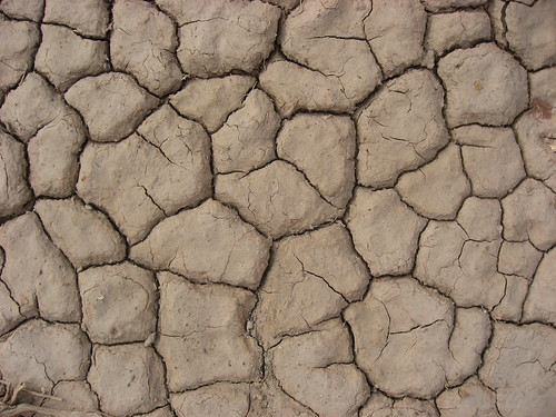 "Mud ""Cells"""