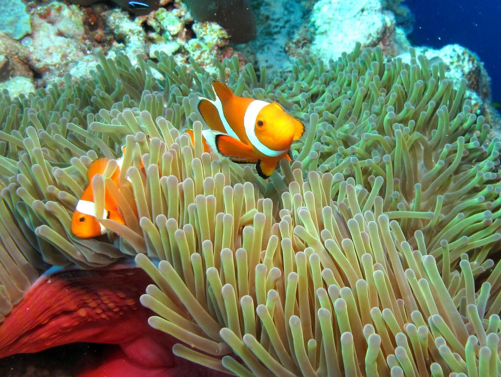 Buceo en Filipinas