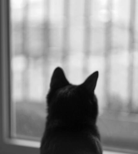Stefan the black cat