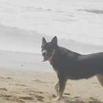 Koda on beach