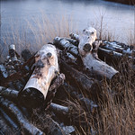 Chobham Logs