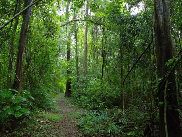 Parque Nacional de Ankarafantsika, Madagascar