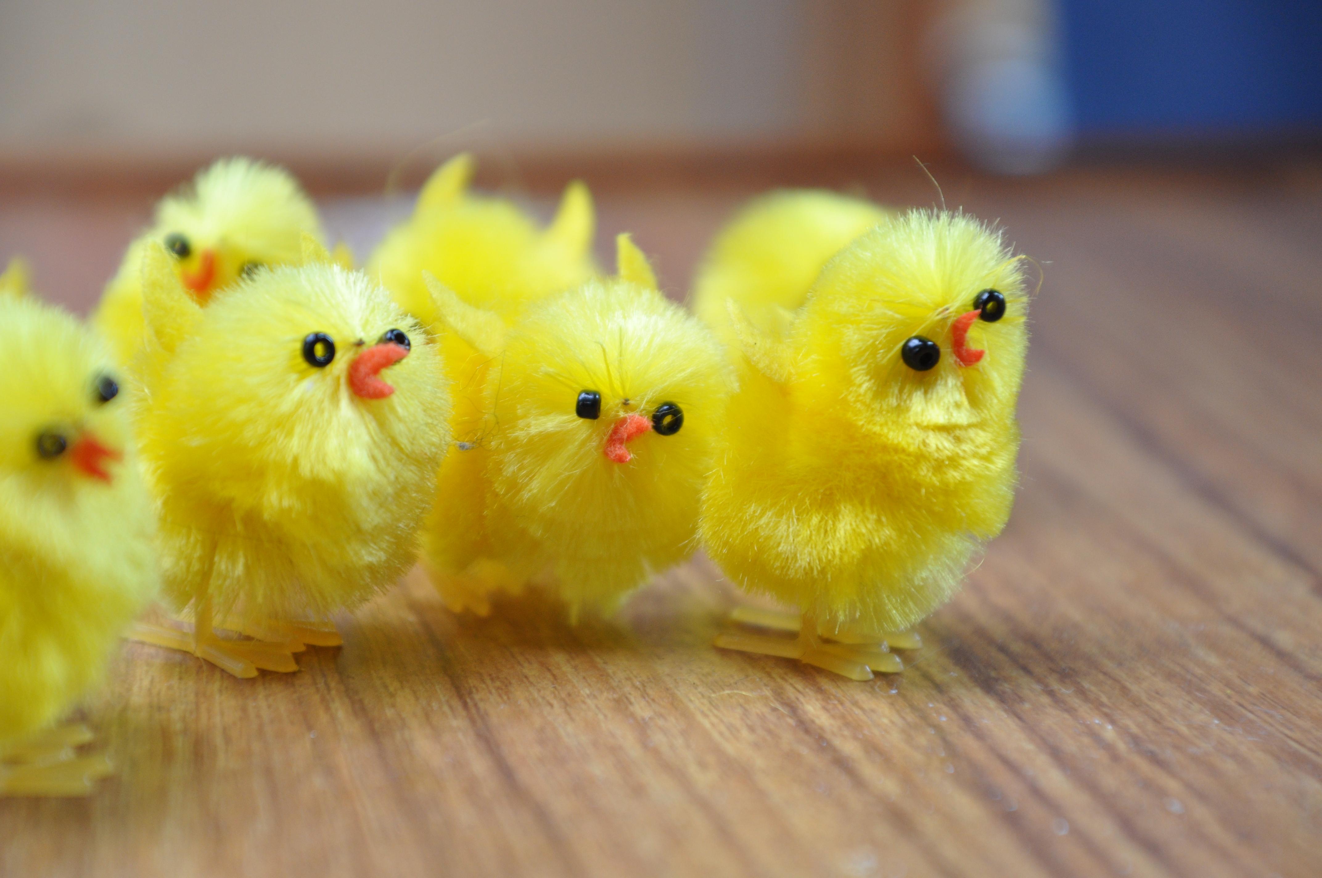 Cr Chicks In West Palm Beach