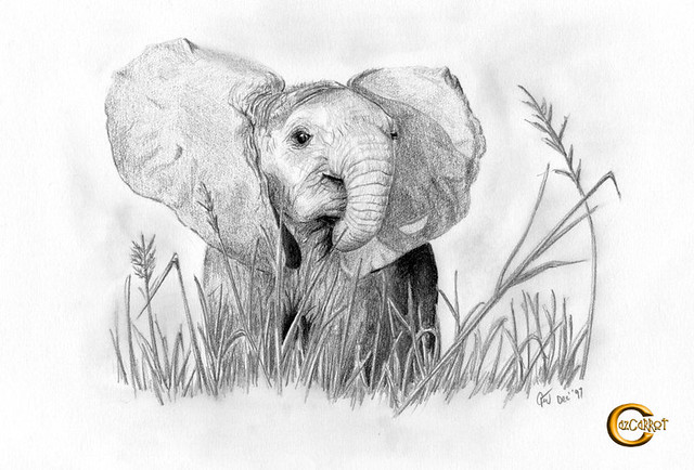 4577633169 38c3d1ff77 z jpgPencil Drawings Of Baby Elephants