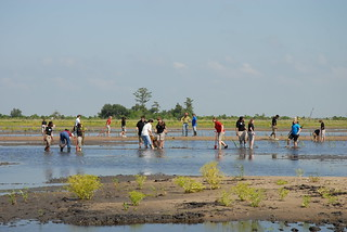 Planting native grasses on a recently completed marsh restoration project