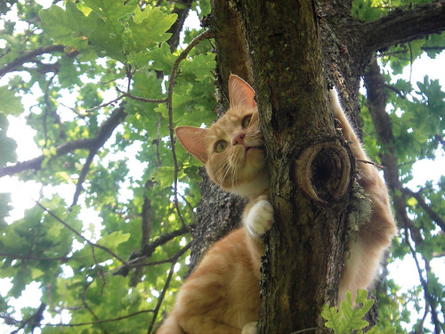 Cat stuck up a tree