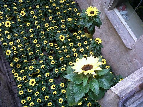 Girona, Temps de flors (10)