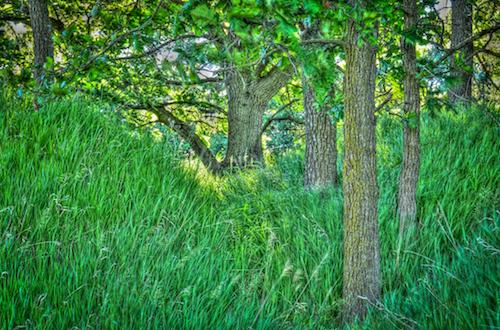 trees green grass landscape hdr nikon18200mm bellevuenebraska westpapiotrail nikond300s