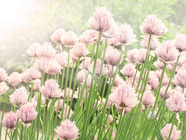 flower+blossom