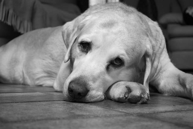Dog Is Bored Barks Alot