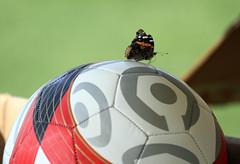 soccer anyone?