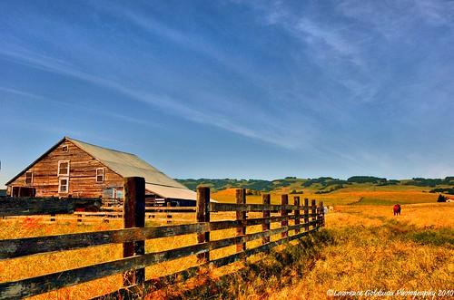 california barn rural landscape decay farm scenic petaluma sonomacounty agriculture ramshackle 100comments nikond90 lawrencegoldman lhg11 flickrstruereflection1 flickrstruereflection3