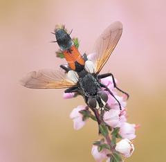 Insect, by Дмитрий Макароk
