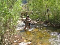 stream, adventure, rainforest, fishing, river, recreation, outdoor recreation, creek, recreational fishing, wilderness, jungle, fly fishing,
