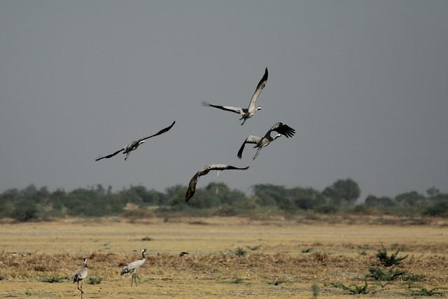 nava talav birds