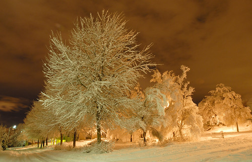 street trees winter snow norway stavanger norge rogaland forus topseven bestofmywinners godeset blinksuperstars