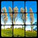 Three Trees Polytypch by Pete Ashton
