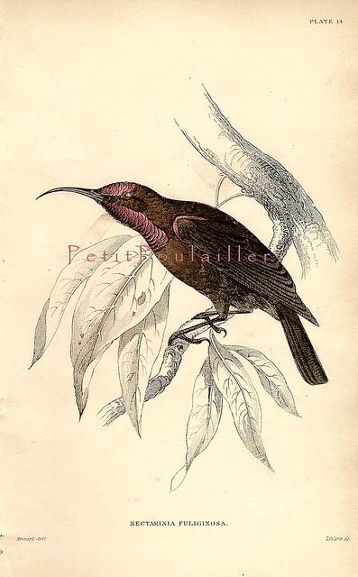 1843 in birding and ornithology