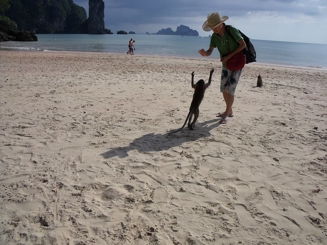Wild Monkeys on Ao Nang beach, Krabi Province, Thailand ...