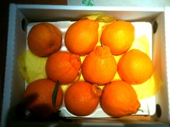 clementine, orange, citrus, orange, vegetarian food, kumquat, produce, fruit, food, tangelo, tangerine, mandarin orange,
