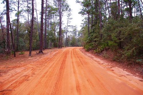 usa forest unitedstates florida nationalforest niceville forestservice eglinafb choctawhatchee okaloosacounty jacksonguard fisherbray eglinrange road231 eglinrangecomplex