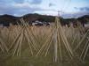 Photo:竹の寒干し - Seasoning bamboos of Takayama // 2010.01.10 - 07 By Tamago Moffle