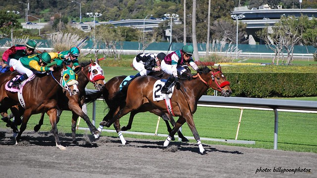 golden gate horse racing