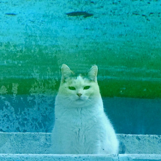 The cat in the pool